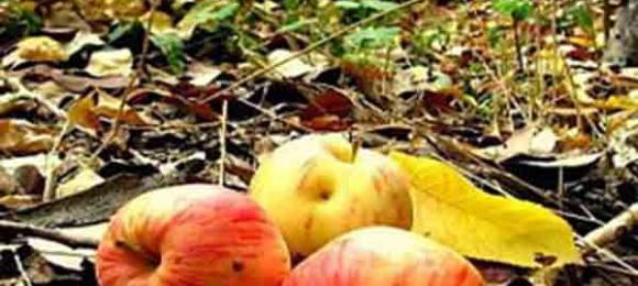 Çürük elma için ne istersin